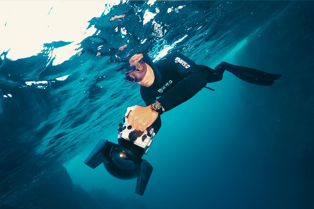 Diver Lemon Shark